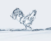 Water Rooster Royalty Free Stock Image