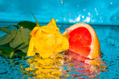 Water a rose a grapefruit Stock Images