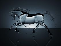 Water running horse over black Royalty Free Stock Image