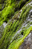 Water running through moss Royalty Free Stock Images