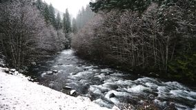 Umpqua River Whitecaps Water Falls Oregon National Forest. Water rushes down the mountain with fresh snow falling Oregon winter stock video footage