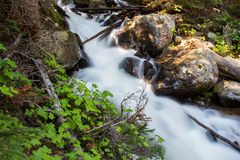 Water rushes down a steep mountain stream in the forest. stock photos
