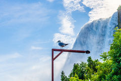 Water rushing over Niagara Falls Royalty Free Stock Photos