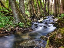 Water rushing from small creek. Water rushing from small narrow stone creek in the woods Royalty Free Stock Image