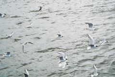 Water sea background with a large group flock of seagulls flying stock photo