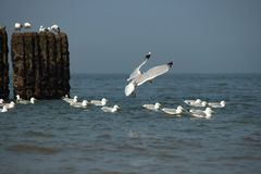 Water, Sea, Bird, Seabird royalty free stock photo