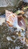 Water, Seashell, Conch, Marine Biology royalty free stock images