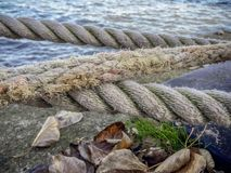 Water, Shore, Grass, Sea stock images