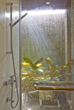 Water from the shower. In the bathroom nature Stock Images