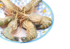 A water shrimp plate. Closeup on uncooked water shrimps Royalty Free Stock Photo