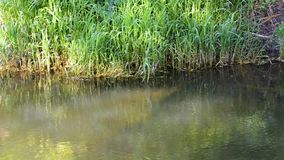 Water with small fish swimming forward against the current. Muddy cold River water with small fish and green algae with reflecting blue sky and trees stock video