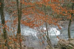 Autumn Leaves & White Water royalty free stock photography