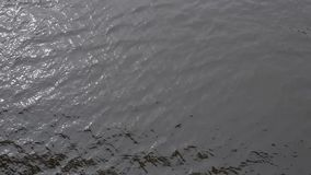 Water with small waves and sun glare. Top view of the river stock video footage