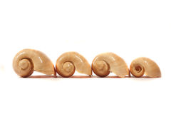 Water Snail Shell Stock Photo