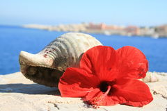 Water snail shell and red hibiscus flower Greece. Water snail shell and red hibiscus flower  Japanese Rose Greece postcard Royalty Free Stock Photography