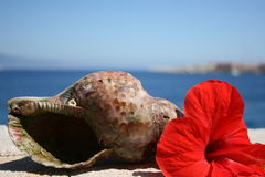 Water snail shell and red hibiscus flower Greece Royalty Free Stock Image
