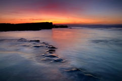 Water Snake. Magoito beach, board of Sintra, Portugal Stock Images
