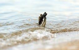 Water snake Royalty Free Stock Image
