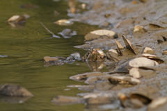 Water snake on the river stock photos