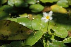 Water Snowflake Stock Image