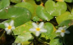 Water Snowflake Stock Photo