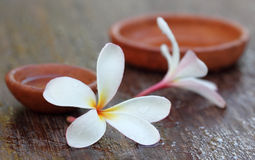 Water soaked Plumeria Royalty Free Stock Photos