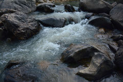 Water source in the forest Royalty Free Stock Photography