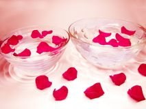 Water for spa with rose petals Royalty Free Stock Images