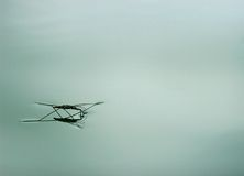 Water spider or pond skater Stock Photography