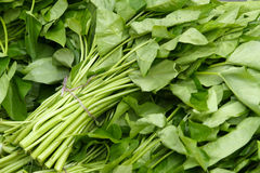 Water spinach Stock Image
