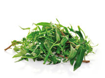 Water spinach Stock Images