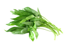 Water Spinach Stock Photos