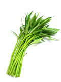 Water spinach. Isolated on white background Royalty Free Stock Photos