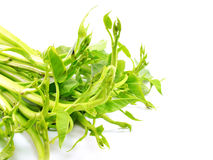 Water spinach isolated on white background Stock Photo