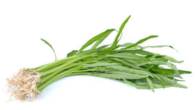 Water spinach , Morning Glory  on white background. Water spinach , Morning Glory  on a  white background Stock Photo