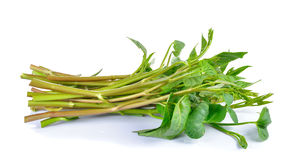 Water spinach , Morning Glory  on white background. Water spinach , Morning Glory  on a white background Stock Photography