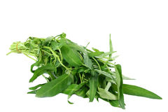 Water spinach swamp cabbage kangkong. Fresh water spinach is also called swamp cabbage or kangkong Stock Image
