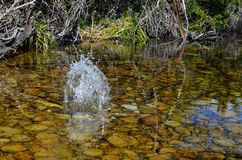 Water splash in a river Stock Images