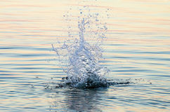 Water splash on the sea surface Stock Photography