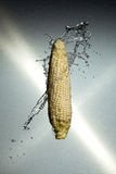 Water splashing ear of corn Stock Image