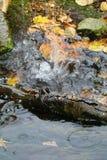 Water splashing. The flow of water after rain Royalty Free Stock Photos
