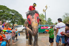 Water Splashing or Songkran Festival in Thailand. AYUTTHAYA, THAILAND - APR 13:  Revelers and elephants join in water splashing during Songkran Festival on Apr Royalty Free Stock Photography