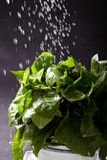 Water splashing vegetable Stock Photo