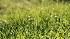 Water spray on green grass stock video footage