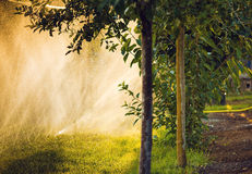 Water sprayed apple trees Stock Photography