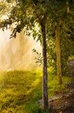 Water sprayed apple trees Stock Image