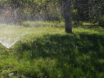 Water is sprayed onto the green grass Royalty Free Stock Photography