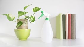 Water sprayer next to an interior home plant and some books on a shelf. White background and empty copy space. For Editor`s text stock images