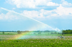 Water Spraying Crops Royalty Free Stock Photos