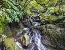 Water spring cascade with moss and stones and lush green vegetation in the rainforest jungle at the end of the hiking. Trail at Salto da Farinha, Sao Miguel royalty free stock photography